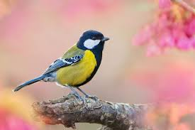Pták na jaře